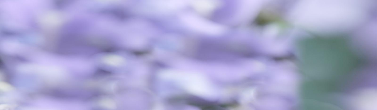 mauve-background